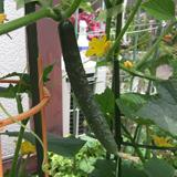 野菜とフルーツを育てています