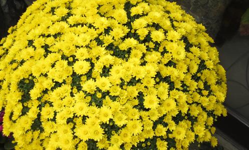 大和建設のお花たち