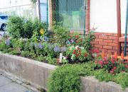 第8回御殿場市花壇コンクール、緑のカーテンコンテスト