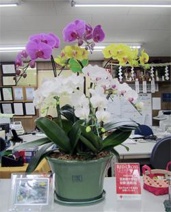 平成24年度緑のカーテンコンテストの入賞賞金でお花を購入しました!