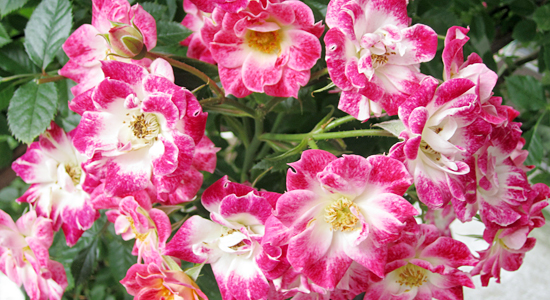 大和建設の花壇