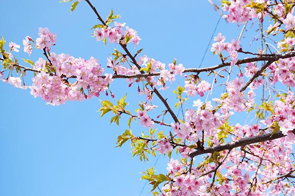 YAMATOの家も春です